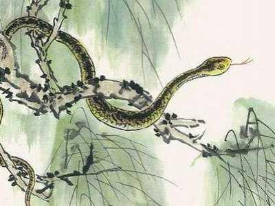 七星堂华人开运网 女命属蛇的人2020年为何犯凶