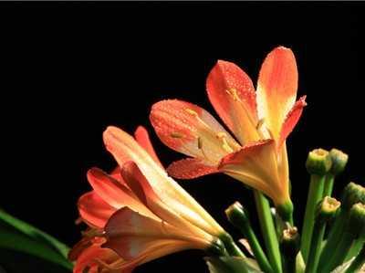 什么植物放在房间里好 冬季室内放什么植物最好